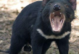 diable-de-tasmanie-r-1680-1200